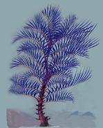 Razor Palm