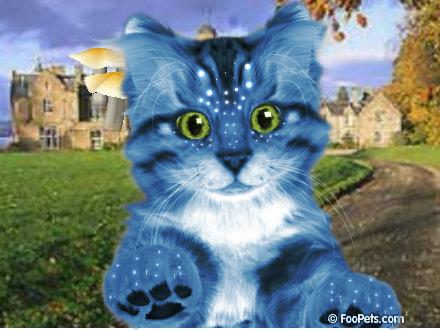 File:Cat Na'vitized Original Background.png