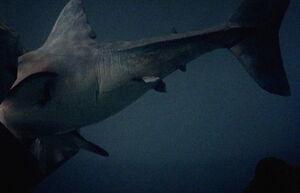 Animatronic shark montage