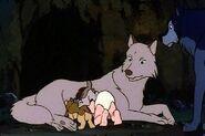 Mowgli, Akru and Sura Feeding