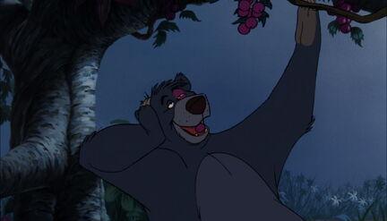 Baloo the Bear is eating grapes