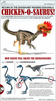 Chickenosaurus-horner-chicken-111222c-02