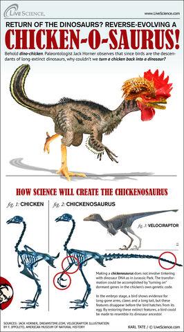 File:Chickenosaurus-horner-chicken-111222c-02.jpg