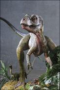 Baby rex