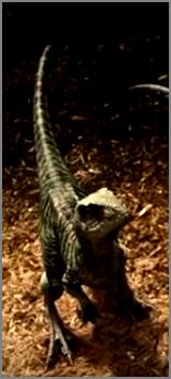 File:Raptors charlie.png