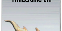 Trinacromerum