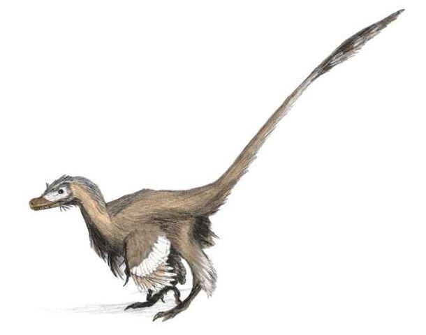 File:Velociraptor4b.jpg