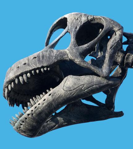 File:Apatosaurus skeleton.jpg