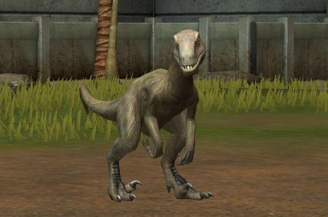 File:Utahraptor Oweni (74).jpg