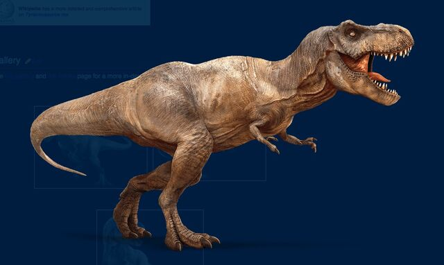File:Female Rex.jpg