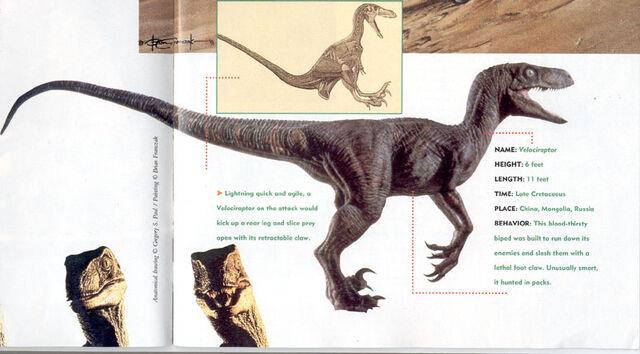 File:Velociraptor art galery 3.jpg