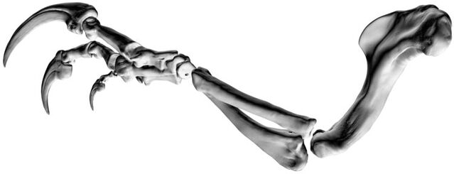 File:Banjos-Arm-3.jpg