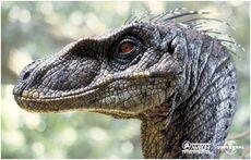 Velociraptor portrait.jpg