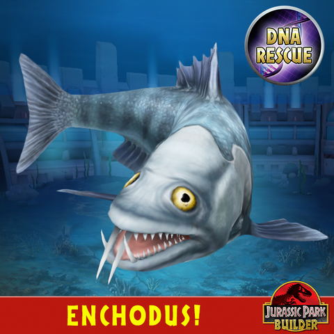 File:Enchodus.png