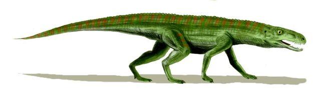 File:Gracilisuchus wikipedia.jpg