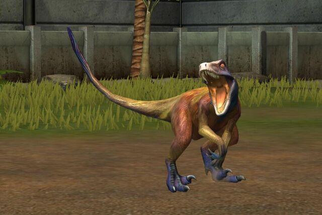 File:Utahraptor Oweni (75).jpg