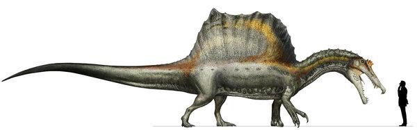 File:Spinosaur new.jpg