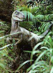 Jurassic bush raptor