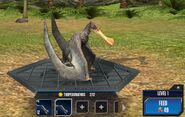 Tropeognathus Base