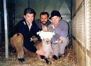 Last bucardo Ordesa1999