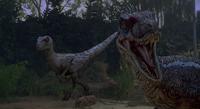 Velociraptor jp3
