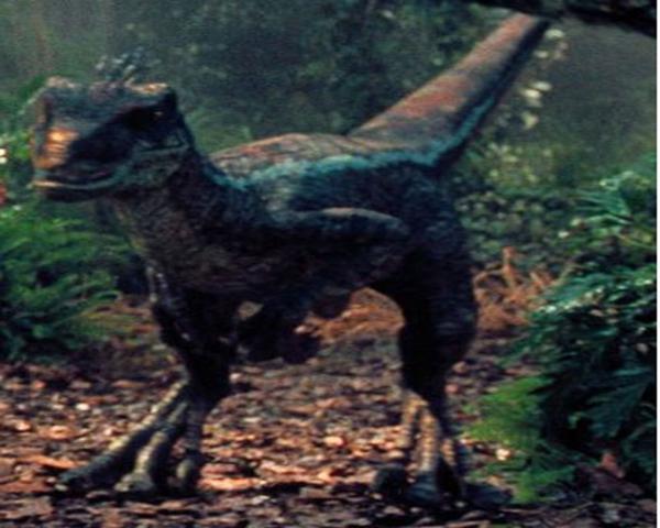 File:Male Raptor.png