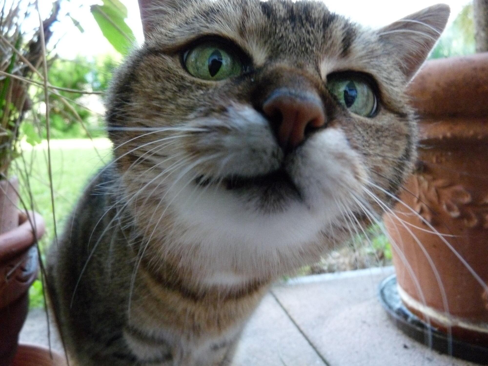 Katzensprache kitty wiki fandom powered by wikia - Katzen giftige zimmerpflanzen bilder ...