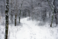 Winter-trail-snow-forest - West Virginia - ForestWander.png