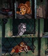 Tumblr Dog Pound Dogs Sad