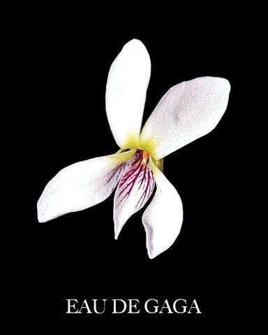 File:Eau de Gaga - White Violet.jpg