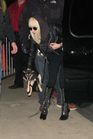 File:Lady Gaga in Atlanta with New Puppy 12-28-09.jpg