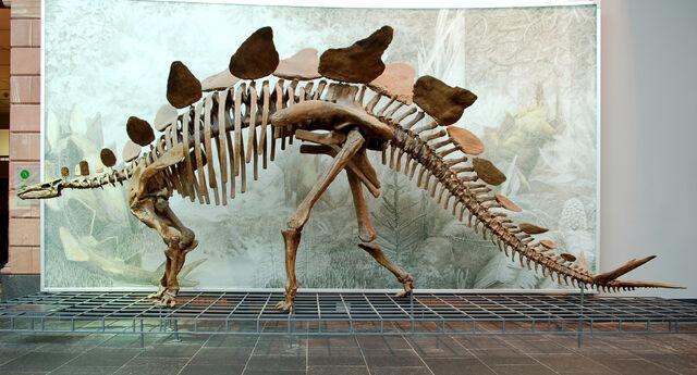File:Stegosaurus.jpg