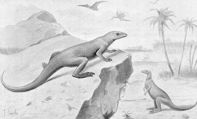 File:Obsolete Hypsilophodon.jpg