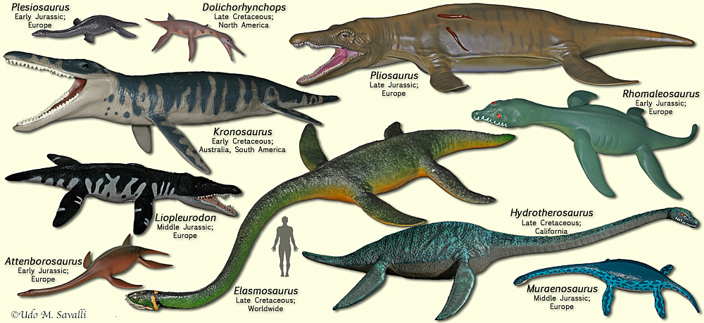 Image result for plesiosaurs