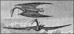 Ornithochirus umbrosus