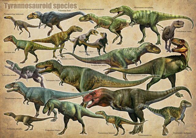 File:Tyrannosauroid species.jpg
