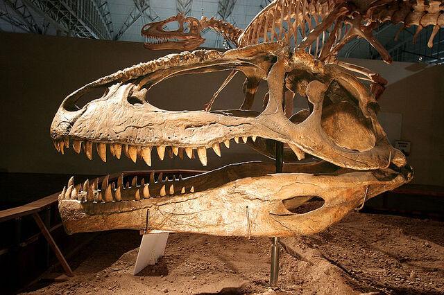 File:Giganotosaurus.jpg