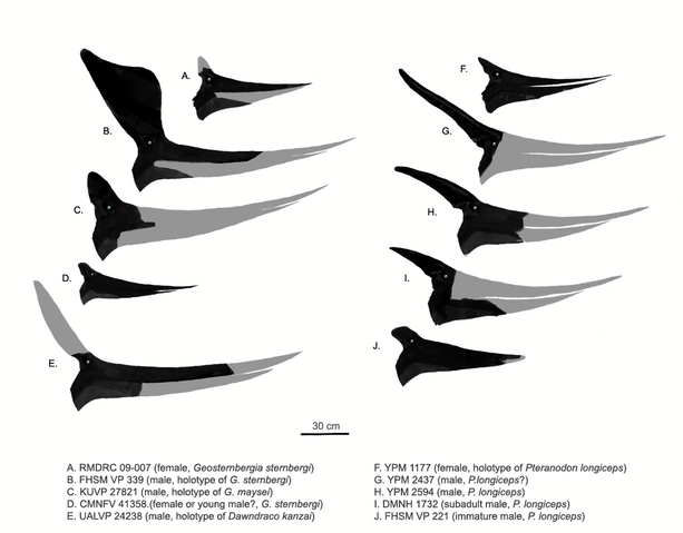 File:Pteranodonts.png