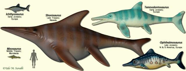 File:IchthyosaurModels.jpg