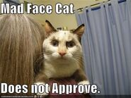 Madfacecatdoesnotapprove