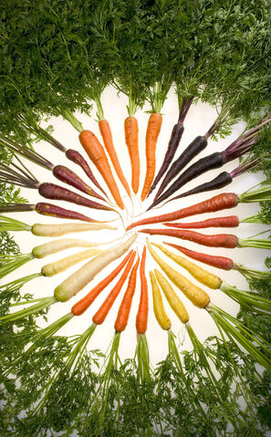 File:Carrots of many colors.jpg