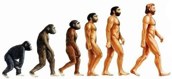 File:Human evolution.jpg