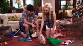 Joey, Emma and Hamlet the Pig