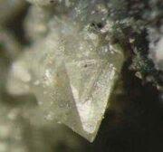 Urbidium.jpg