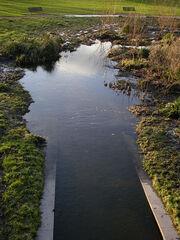 Sutcliffe Park 1