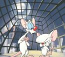 List of Pinky and the Brain episodes