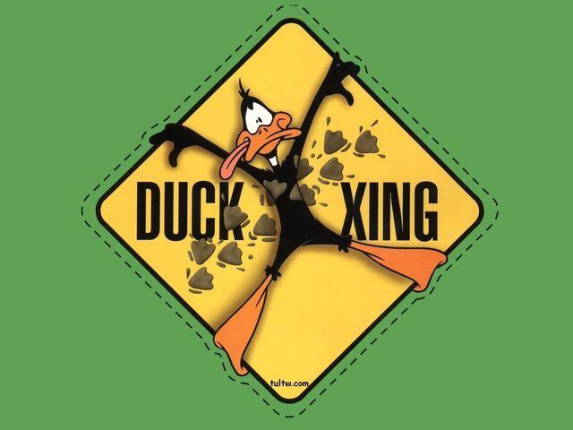 File:Daffy 3.jpg