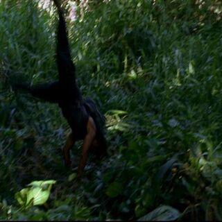 Sayid uwięziony w sidłach <a href=