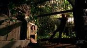 Sawyer's Cage.jpg