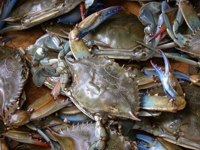 File:Mr. Crabby.jpg
